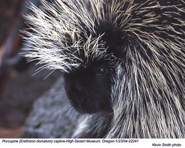 Porcupine22241.jpg