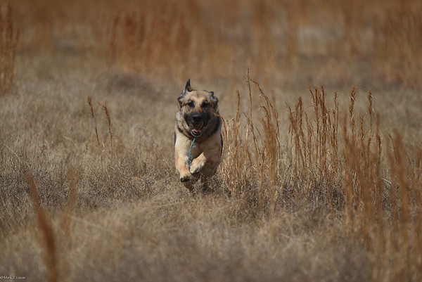 Fritzi running