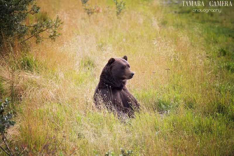 Bear2-9-2.jpg