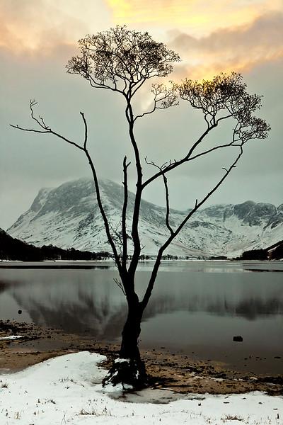 Buttermere tree.jpg