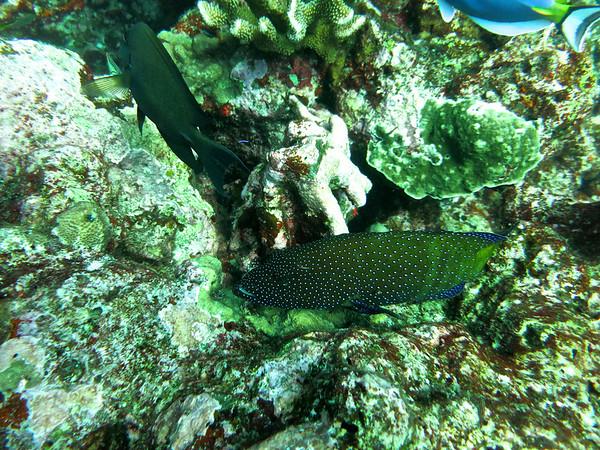 Similan Islands Dive Trip Days 1 & 2