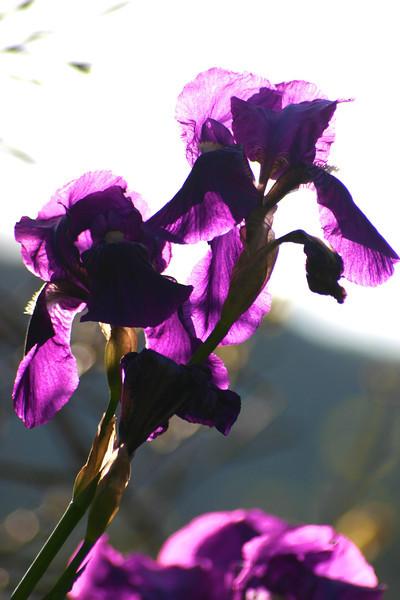 flowers near Vernazza.jpg