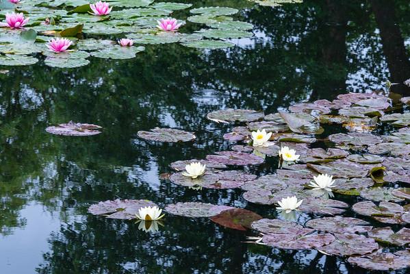 2019 06 03 Jardins de Claude Monet
