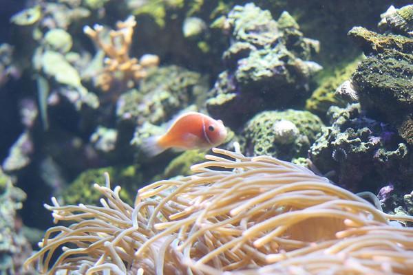 Aquarium of the Bay (San Francisco)