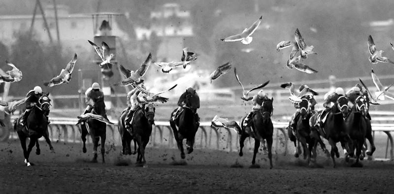 horseflying.jpg