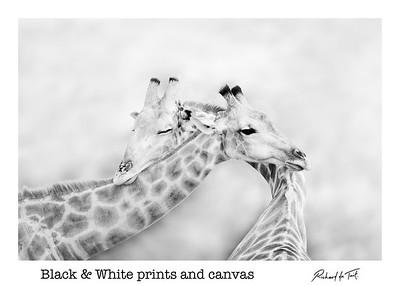 Black & White Prints & Canvas