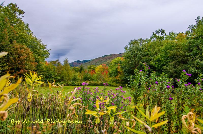 NH Foliage-22.jpg