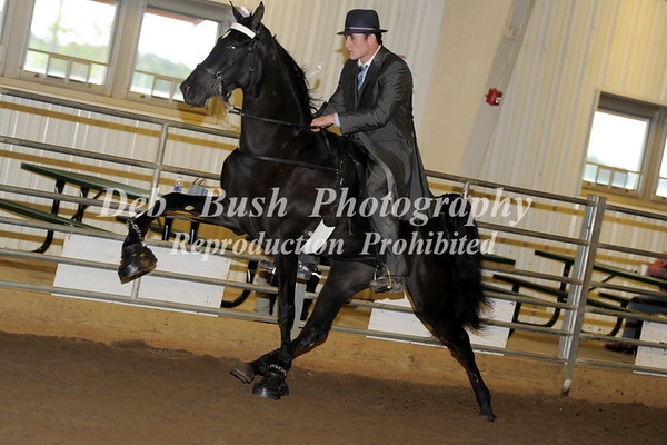 CLASS 14  TWO YR OLDS MARES & GELDINGS  OPEN