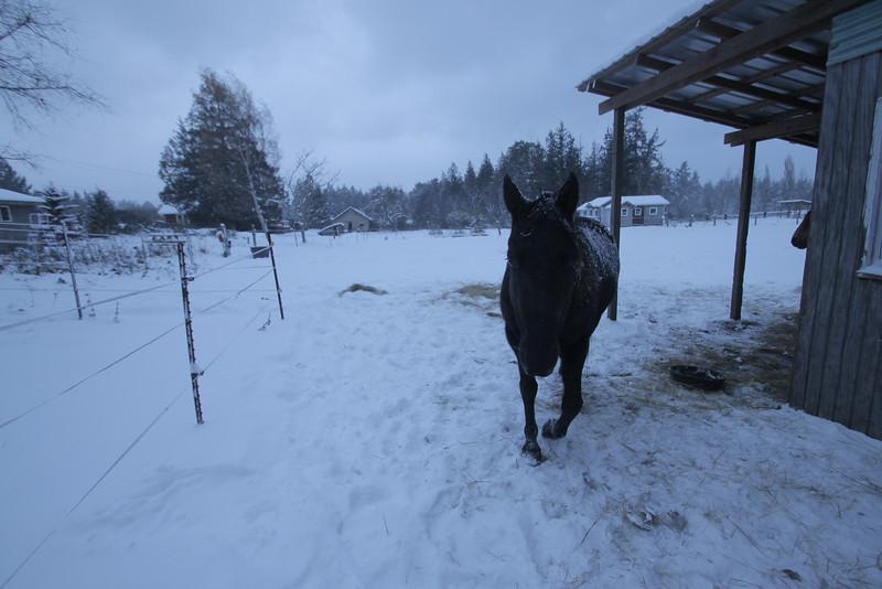 snow (89).JPG