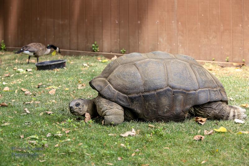 2016-07-17 Fort Wayne Zoo 979LR.jpg