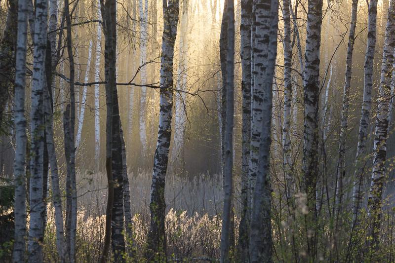 20140426_Vasula_051_1200.jpg