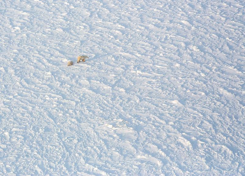 RA Pair on Ice HC.jpg