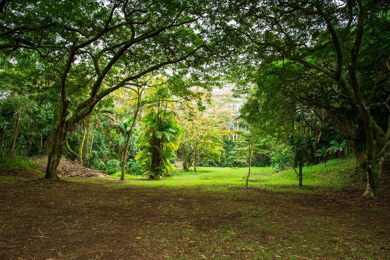 Hawaii-217.jpg