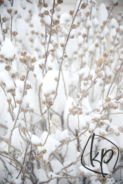 Snow Storm Ion in Northwest Indiana