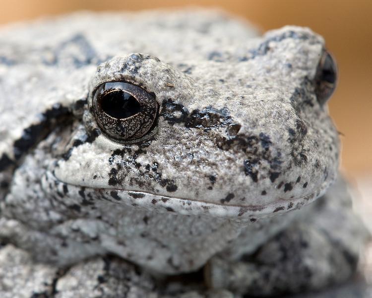 Froggy-7.jpg