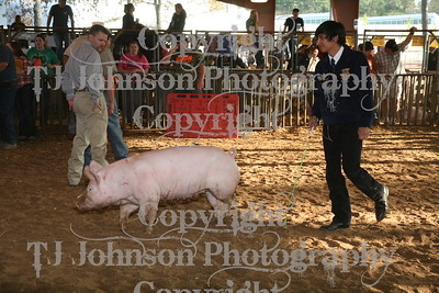 2011 Klein ISD Swine Show Class 5