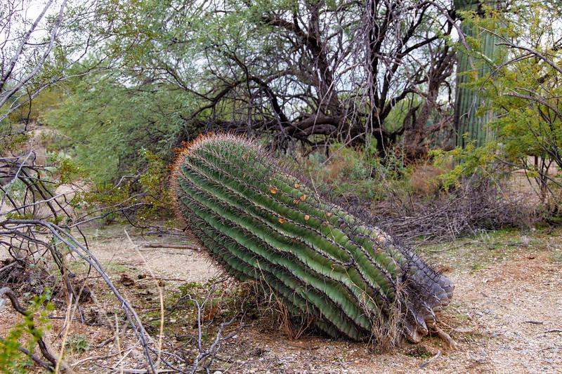 Skewed Cactus