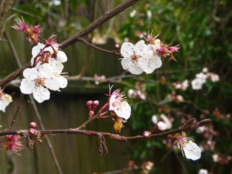 spring flowers-1000739.jpg