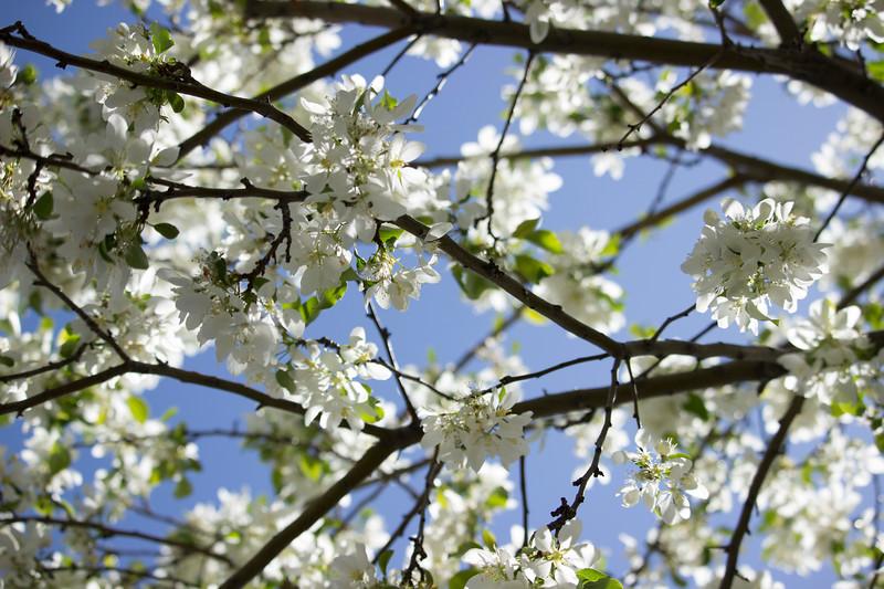 KoRedfield-Floral05.jpg