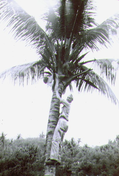 Wayne on Guam 1945, Any one for a coconut .jpg