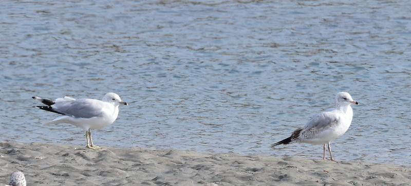 Solana Beach and San Dieguito Lagoon mouth - 01/03/2016