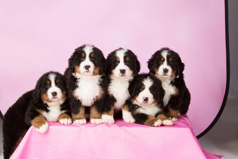 2013-Pearson Pups-Jun02-0301.jpg