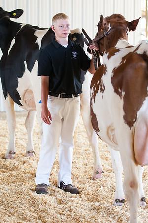 Boone County Fair Dairy Show 2015