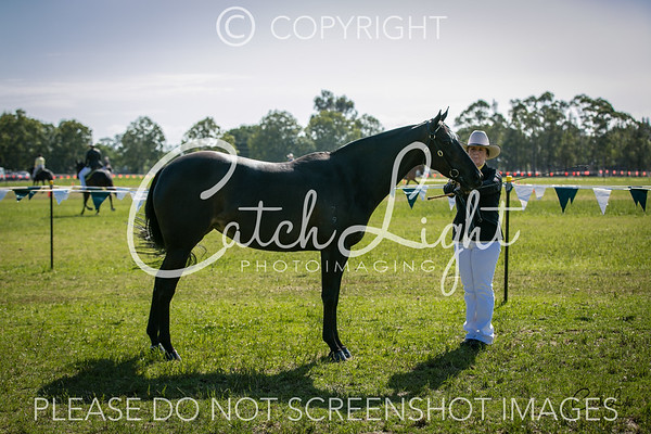 203 Ch Led Mare 4yrs & over