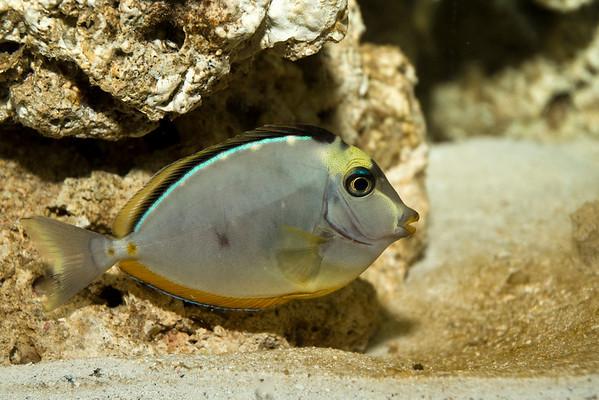 Shelli's Aquarium