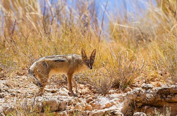 Dog-Like Mammals (Canidae)