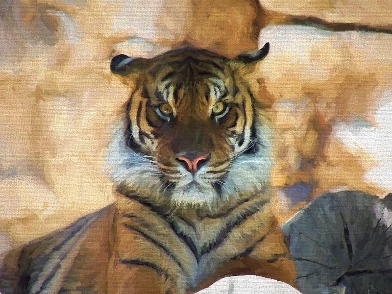Tiger Face On_Topaz Oil Degas.JPG