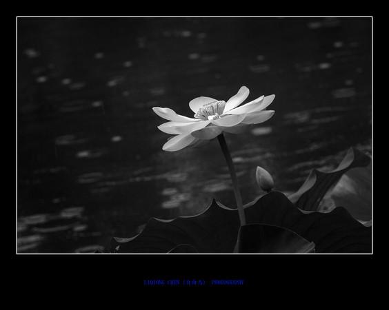 IMG_2997-M.jpg