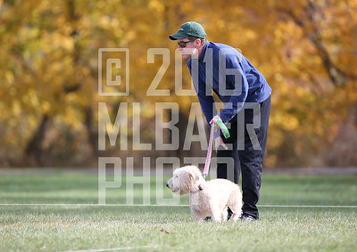 glen-of-imaal-terrier