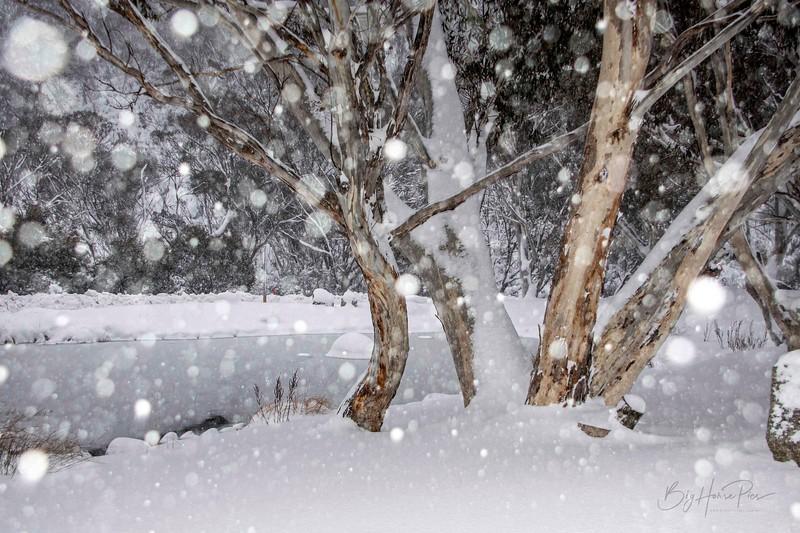 Snowy scene Aug 8,2019 -20_1.jpg
