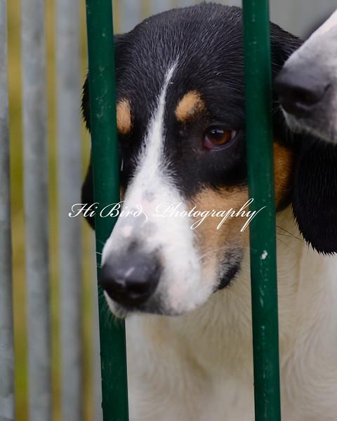 hounds 2272.jpg