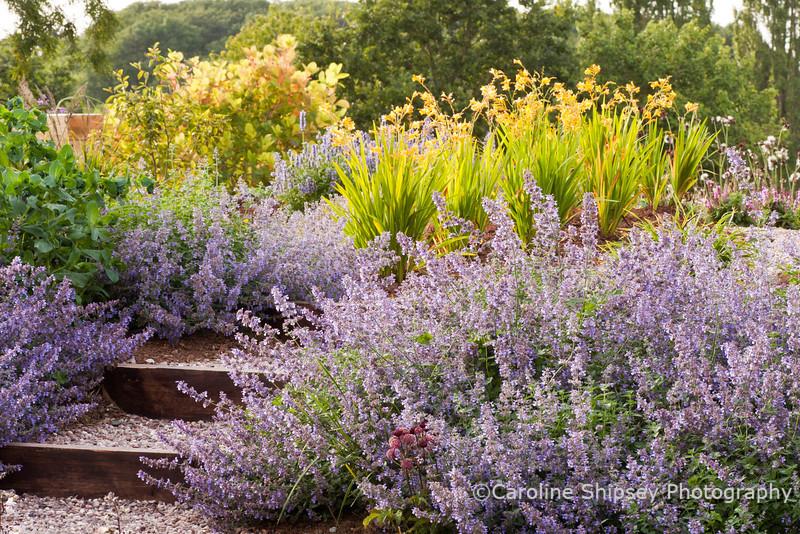 The Organic Gardens,Holt Farm-4355.jpg
