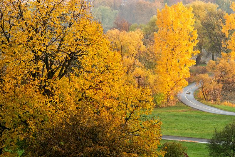 Autumn colours-Arboretum_Oct 20-2012_01.jpg