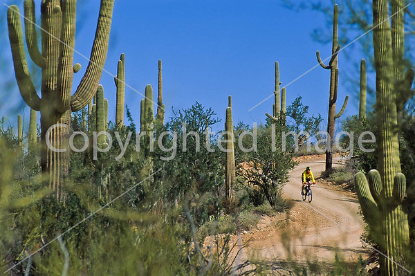 Saguaro National Park - Hohokam Road - Bikers & Scenery