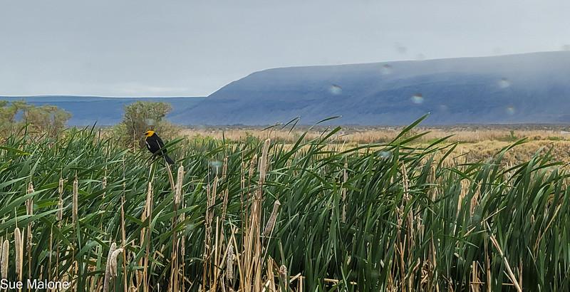 05-19-2021 Summer Lake Wildlife Refuge-31.jpg