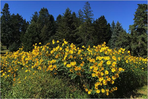 Flora. Jamaica Plain.