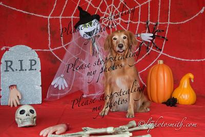 Barb's Halloween  Buddies 2013