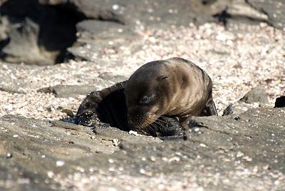 Galapagos: Puerto Egas, Santiago Island