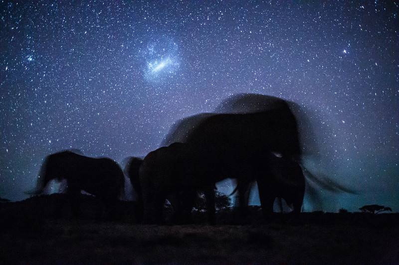 Elephants under the stars