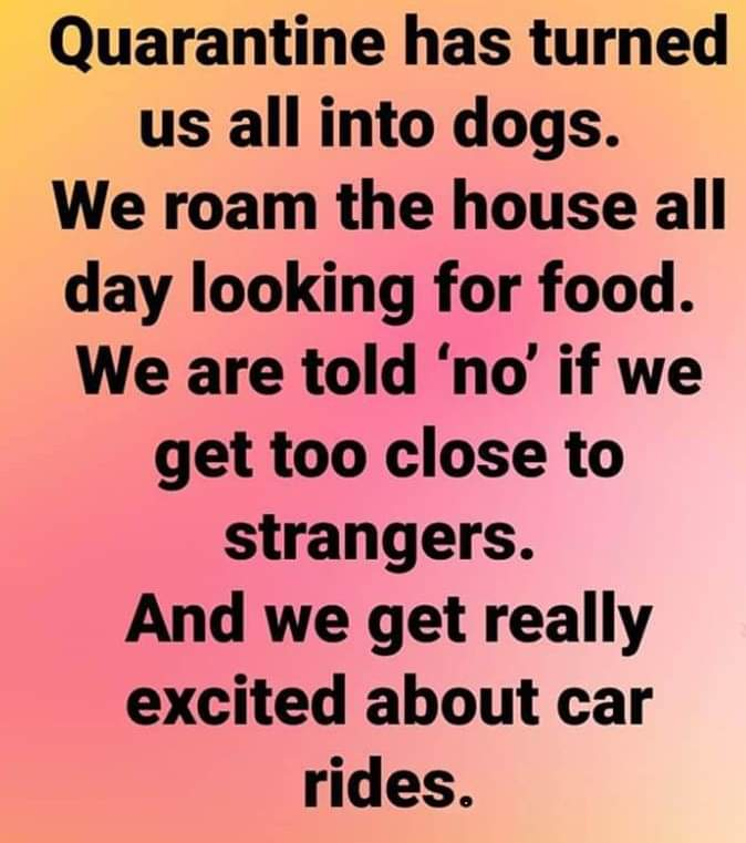 Quarantine has turned us all into dogs. We roam the house all day looking for food. We are told 'no' if we get too close to strangers. And we get really excited about car rides.