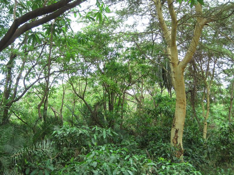 Tanzania14-3306.jpg