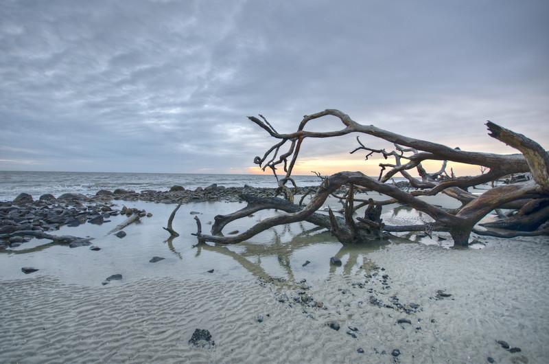 Cumberland Island-11.jpg