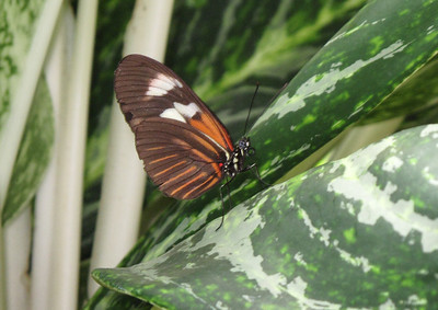 Key West Butterfly Conservatory