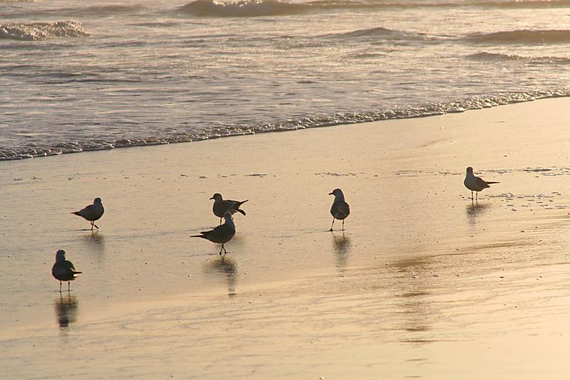 4016 Birds on Sand.jpg
