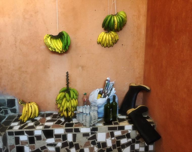 Banana for the birds