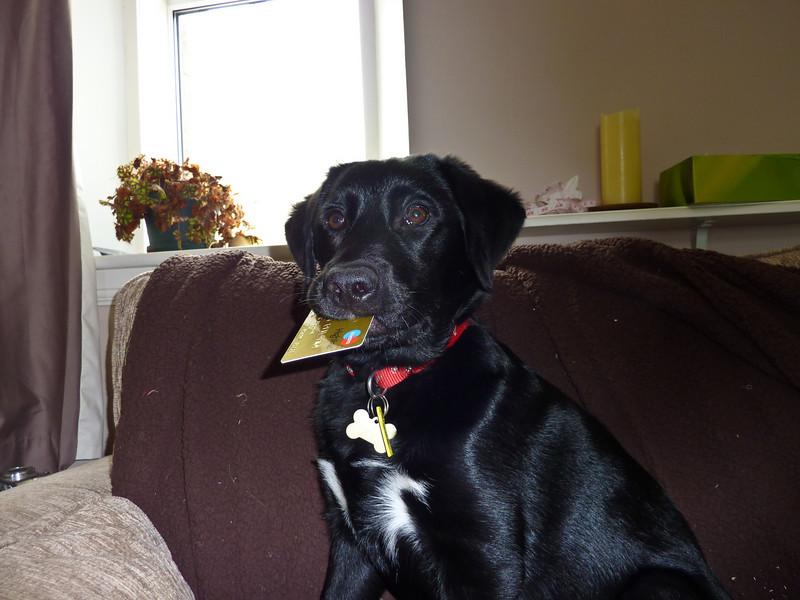 Sprocket Doggy-1010133